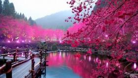 hd-wallpapers-lake-sakura-japan-wallpaper-cherry-blossom-1024x768-wallpaper