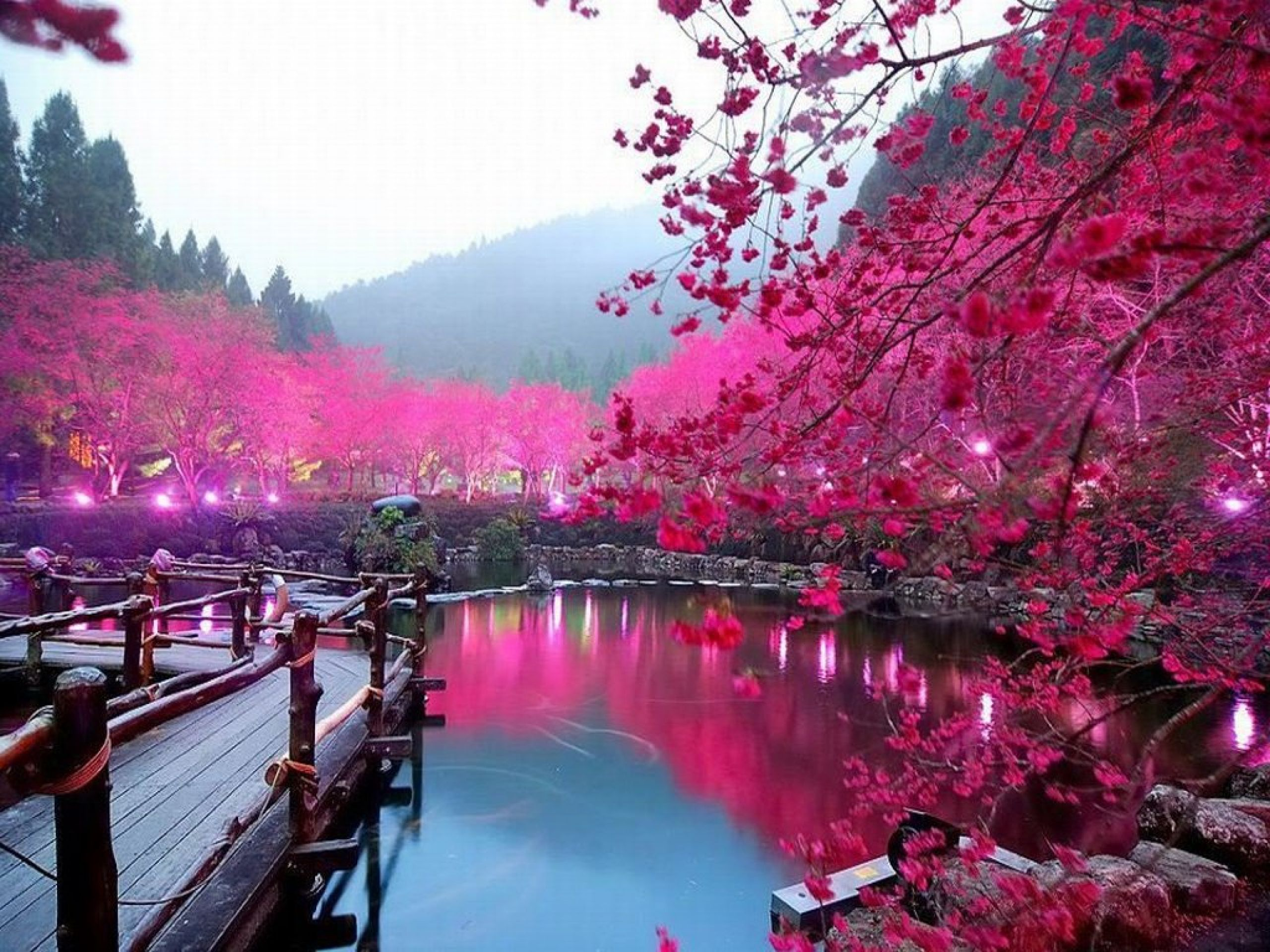 http://www.serlo.info/wp-content/uploads/2013/12/hd-wallpapers-lake-sakura-japan-wallpaper-cherry-blossom-1024x768-wallpaper.jpg
