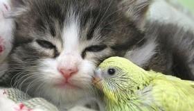 Дружба между животными 1
