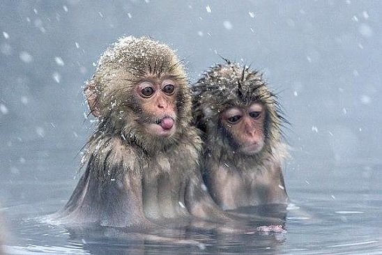 обезьяшки